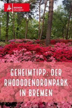 Parks, Mai, Germany, Travel, Bremen, Round Round, Travel Destinations, Vacations, Plants