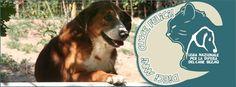 Da 10 anni le Cucce Felici lavorano per sostenere la Sezione di L'Aquila della Lega Nazionale per la Difesa del Cane. #cuccefelici