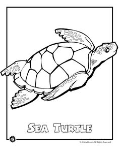 Superb Endangered Sea Turtle Endangered Ocean Animal Coloring Pages And Morr