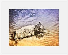 Lost Lagoon Duck