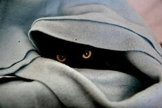 #feline