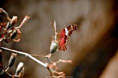 (c) 2010 - NATURE  NIKON D70 - Nikkor 18-70mm ______ #nature #naturelover #naturelovers #naturephotography #natureza #naturegram #natureshots #naturephoto #naturebeauty #photography #photographer #beautifull #park #parque #jardim #garden #fotografia #fotografo #ronaldoichi #摄影 #色彩 #カメラマン #フォトグラフィー  #写真 #自然 #植物 #butterfly #borboletas #ftwotw