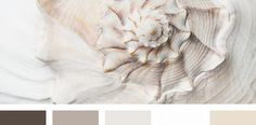 shell palette | IN COLOR BALANCE