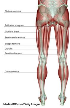 A Pain in the Rear: High Hamstring Tendinitis | Running Times