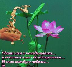 Анимированная открытка media cache ak0 pinimg