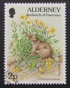 The greater white-toothed shrew (Crocidura Russula) and Hypericum . Alderney, Bailiwick of Guernsey, a British stamp, circa 1994
