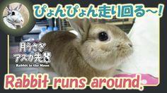 ぴょんぴょん走り回る~!【ウサギのだいだい 】Rabbit runs around. 2016年5月11日