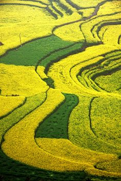 Rape Flower Fields Luoping County Yunnan Province China and… Beautiful Flowers, Beautiful Places, Farm Village, Parks, Modern Agriculture, Cool Landscapes, Mellow Yellow, Aerial View, Mother Earth