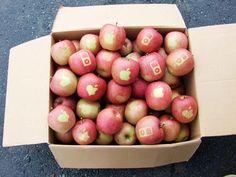 apple on apple