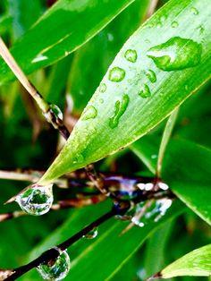 Bamboo tras la lluvia