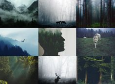 Forest (1) Aesthetics by me :)