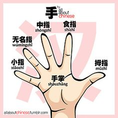 Names of each part of the hand in Chinese