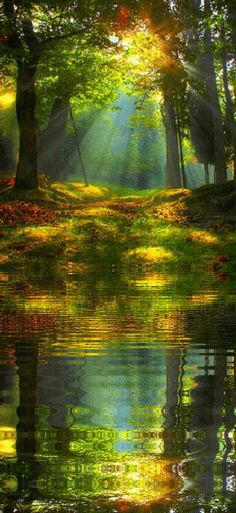 Autumn Sunrise in the forest, just beautiful. Thank you Lord, for creating such a breath-takingly beautiful world. Pretty Pictures, Cool Photos, Amazing Pictures, Pictures Images, Jolie Photo, Amazing Nature, Beautiful Images Of Nature, Beautiful Nature Photography, Beautiful Scenery