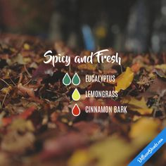 Spicy and Fresh - Essential Oil Diffuser Blend