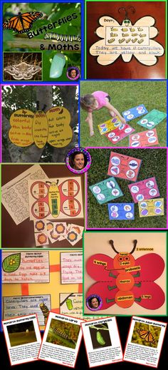 This thematic Butterflies and Moths unit incorporates Reading, Writing Science & Math to engage young children. It has been tested with 5 classes of Kindergarten students & 6 classes of 1st grade students during our school's innovative Butterflies & Moths Showcase. The students & teachers loved it. This unit is engaging, interactive and fun! It includes everything you need to implement including 10 information cards with real pictures. Download the PREVIEW for a free sample!