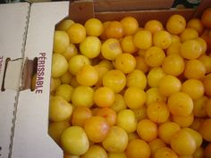 Love these Ontario yellow plums! They're plum perfect!