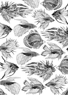 Fishy Fishes by Gavin Rutherford, via Behance