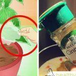Presără o lingură de scorțișoara pe plantele din casă și un lucru uimitor se va întâmpla! Website, Garden Pests, Vanda Orchids, Vegetable Gardening, Landscaping, Gardening, Tips, Canela, Plants