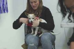 A Shelter Held An Ugly Sweater Party For Animals And It'll Warm Your Cold Heart