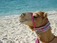 dubai strand - Google-Suche Dubai Airport, United Arab Emirates, Uae, Google, Animals, Animales, Animaux, Animal, Animais