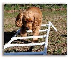 dog diy agility training equipment - Google Search