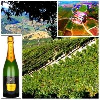 Un Blanc de Noir targato Oltrepò Pavese | #daniele #sala #metodo #classico #oltrepò #pavese #pinot #noir #vinoway #acinus