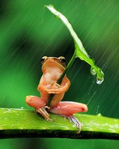 He avoided taking a battering by the rain drops, which instead collected on the leaf above him