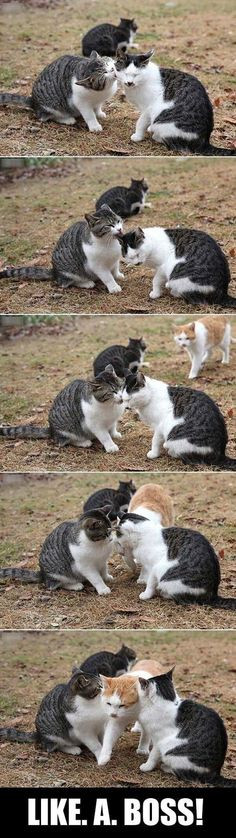 May the orange cat represent me....maybe I'll even try this the first time I see you guys kiss...Which just might be at the wedding... Haha!