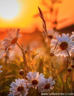 Günün Olumlaması : Yaptığım herşey özenlidir. Hayatıma, aileme,işime, ilişkilerime sevgi ve çoşkuyla bağlıyım. Kıymet bilir ve kıymet verilirim. Değerliyim... #bybegumkarace #iyilikmerkezi #guneguzelbasla #guneozenlebasla #pozitifkal #gününolumlaması #25042016 #tekraret #hergün #iyigelir