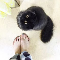 Pin for Later: Meet Your New Obsession — Gimo the Big-Eyed Cat