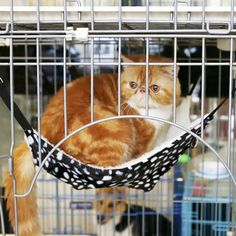 Cat Hammock – Accessories & Products for Cats
