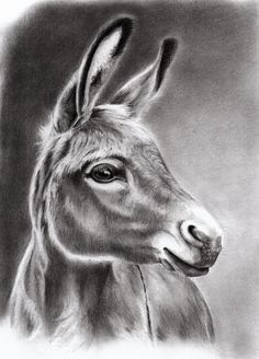 How To Draw A Realistic Donkey Face