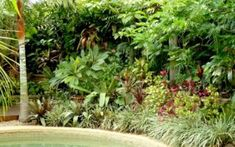 Fantastic Tropical Garden Landscaping Ideas … - Famous Last Words Common Garden Plants, Butterfly Garden Plants, Leafy Plants, Cottage Garden Plants, Exotic Plants, Garden Pots, Planting Flowers, Vegetable Garden Design, Garden Landscape Design