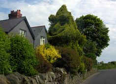 Hedge Monster, Anglesey by davidrobertsphotography