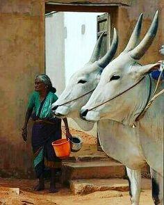 मैं उसे खोजता रहा जो कभी खोया नही था ... ताउम्र उसे जगाता रहा ..जो कभी सोया नही था ... इंतजार में गुज़ार दी सारी ज़िन्दगी उसके.... जिस फूल का बीज... कभी बोया नही था .........मदारी  #sadhguru #raviravishankar #prashanttripathi #osholovers #oshointernational #mahadev #spirituality #hindiquotes #oneworld #adhyatm #harharmahadev #samshaan #jaggivasudev #truth #satye #guru #kabeermadari #meditation