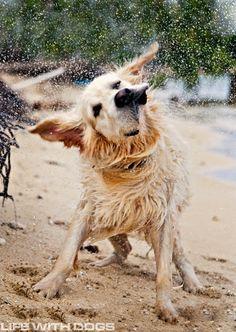 Dog at the beach... i heart my beach pup