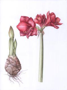 Vase, Spring, Illustration, Design, Home Decor, Decoration Home, Room Decor, Illustrations, Flower Vases
