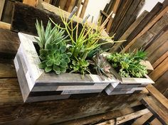 Undeniable Quality in Sustainable Material Succulent Boxes, Succulents, Sustainability, Hardwood, Herbs, Plants, Natural Wood, Herb, Succulent Plants
