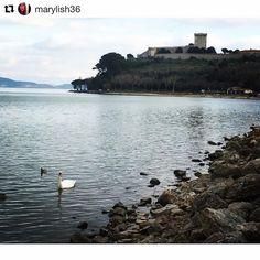 #Repost @marylish36  #lake #trasimenolake #italy #umbria #lagotrasimeno #swan #swanlake #cigno #castle #love #loveyou