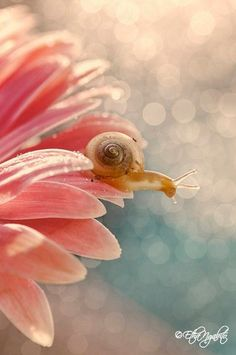 Amazing shot of a baby snail resting