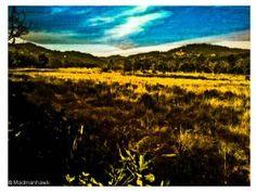 the jungles of corbett