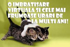 Felicitare draguta de la multi ani Animals And Pets, Happy Birthday, Album, Cats, Box, Pets, Happy Brithday, Gatos, Snare Drum