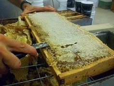 How Honey is extracted from the comb - Honeyrun Farm blog: Honey Extraction