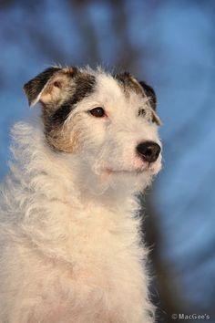 Torsti <3 <3 <3 Husky, Dogs, Animals, Animales, Animaux, Pet Dogs, Doggies, Animal, Animais