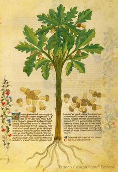 Your virtual eye on illuminated manuscripts, rare books, and the stories behind them. Plant Illustration, Botanical Illustration, Alchemy Art, Principles Of Art, Illuminated Manuscript, Voynich Manuscript, Albrecht Durer, Scroll Design, Floral Illustrations