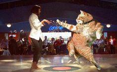 Redditors Reimagine Photo of a Flexible Cat in Hilarious Photoshop Battle - My Modern Met