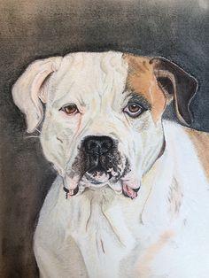 Betty, my American Bulldog