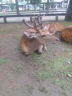 #nara #narapark #deer #奈良 #奈良公園 #鹿 さん