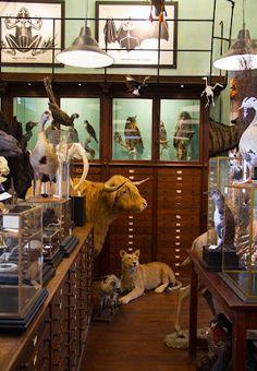 Deyrolle-Taxidermy shop in Paris