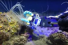 Squishy Fingers robot can help aid the circle in our adventures through the depths of the Marianas Trench. I love the idea and I hope we can develop technology just the same but better.